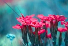 Los colores hermosos de la primavera fotografía de archivo