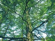 Los colores verdes de las montañas fotos de archivo libres de regalías