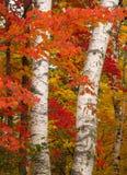 Los colores vibrantes de la caída Imagen de archivo libre de regalías