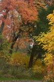Los colores vivos marcan la progresión de la temporada de otoño en este Murfreesboro, parko de Tennessee fotografía de archivo libre de regalías