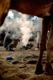 Los comerciantes del camello se ponen en cuclillas alrededor de las ascuas de un fuego en la oscuridad, Pushkar Mela, Rajasthán,  fotografía de archivo