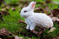 Los conejos del bebé se están ejecutando alrededor Imagen de archivo