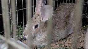 Los conejos en la jaula comen la hierba almacen de video
