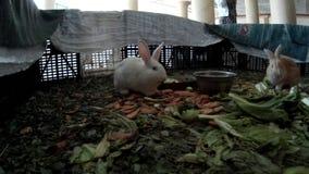 Los conejos jovenes en un hotel cabildean la visión trasera almacen de video