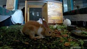 Los conejos jovenes en un hotel cabildean vista delantera metrajes