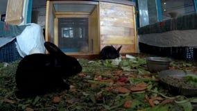 Los conejos jovenes en un hotel cabildean vista delantera almacen de metraje de vídeo
