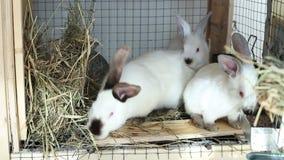 Los conejos video en una jaula comen la comida metrajes