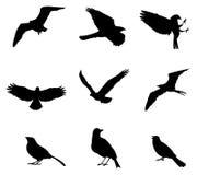 Los conjuntos de pájaros de la silueta, crean por vector Fotos de archivo libres de regalías