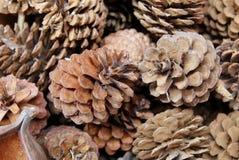 Los conos del pino en el mercado de la flor Fotos de archivo