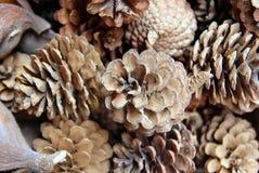 Los conos del pino en el mercado de la flor Fotografía de archivo