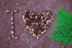 Los conos y el helecho hermosos del pino se presentan en la tierra Imagenes de archivo