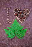 Los conos y el helecho hermosos del pino se presentan en la tierra Fotografía de archivo libre de regalías