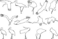 Los contornos de cigüeñas Fotografía de archivo