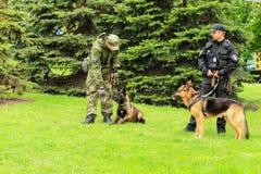 Los controladores de perro policía ucranianos con los perros de pastor entrenados protegen orden público en un acontecimiento tot imagenes de archivo