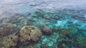 Los corales coloridos hermosos visibles en el océano cristalino transparente riegan cerca de la isla de Mansuar en Raja Ampat Pap imagenes de archivo