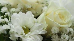 Los cortes truncados del florista una flor de la amarilis pusieron en la forma redonda del agua una caja blanca metrajes