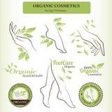 Los cosméticos orgánicos diseñan el sistema con las partes del cuerpo femeninas contorneadas - pie, mano Fotos de archivo libres de regalías