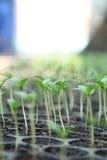 Los crecimientos suben la planta Fotografía de archivo