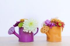 Los crisantemos hermosos florecen en latas anaranjadas y púrpuras del agua Fotografía de archivo
