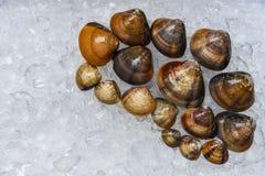 Los crustáceos esmaltan almejas de los mariscos de la cáscara del venus en el cubo de hielo en supermercado fotos de archivo
