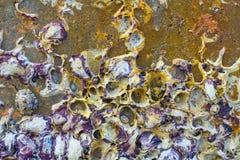 Los crustáceos permanecen Foto de archivo