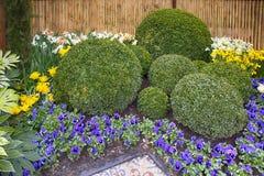 Los cuencos redondos de boj como ejemplo del paisaje diseñan en el jardín botánico de Keukenhof en la primavera Fotografía de archivo libre de regalías