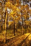 Los días pasados de otoño Foto de archivo