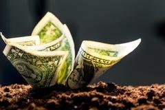 Los dólares americanos crecen Imágenes de archivo libres de regalías