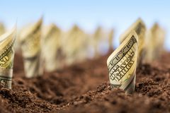 Los dólares americanos crecen de la tierra Imagen de archivo libre de regalías