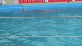 Los delfínes emergen de la piscina almacen de metraje de vídeo