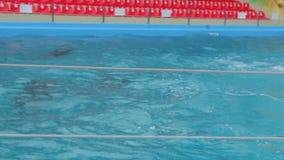 Los delfínes en la piscina almacen de metraje de vídeo