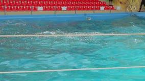 Los delfínes entrenados nadan almacen de metraje de vídeo