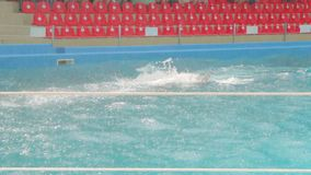 Los delfínes juntan nadar almacen de video