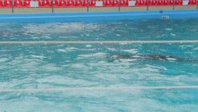 Los delfínes nadan bajo la lluvia almacen de video