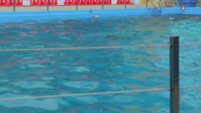 Los delfínes nadan en la piscina almacen de metraje de vídeo