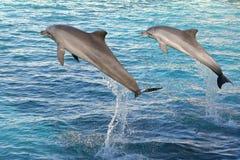 Los delfínes que saltan dos Fotografía de archivo libre de regalías