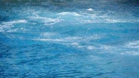Los delfínes que saltan y que se zambullen en unísono