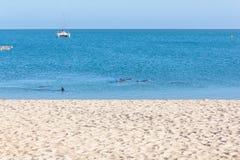 Los delfínes cerca de la playa Fotografía de archivo