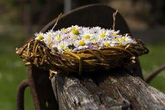 Los des Gänseblümchens stockfoto