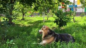 Los desamparados persiguen restos en el jardín en la hierba verde Cuidado para los animales sin hogar almacen de video