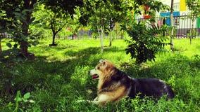 Los desamparados persiguen restos en el jardín en la hierba verde Cuidado para los animales sin hogar almacen de metraje de vídeo