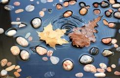 Los descensos caen en las hojas y las piedras en agua Hojas del arce y del roble Imagen de archivo libre de regalías