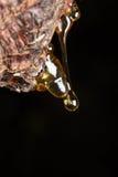 los descensos de la echada ambarina fluyen abajo en árbol Fotos de archivo