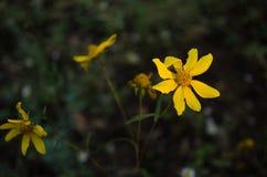 Los descensos de rocío minúsculos cogen luz del sol en las flores blancas Imagenes de archivo
