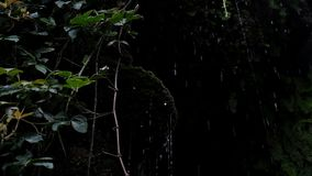 Los descensos fluyen abajo de un acantilado con las plantas, goteo de piedras, cámara lenta de la lluvia metrajes