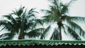Los descensos tropicales del viento y de la lluvia que bajan en la palmera verde se van en la isla Koh Samui Cámara lenta 3840x21 almacen de video