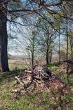 Los desperdicios de madera alistan para quemar Foto de archivo