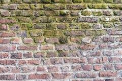 Los detalles de una pared de ladrillo histórica con el musgo y los limescales - perfeccione para los fondos del grunge Imagen de archivo libre de regalías
