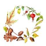 Los dibujos de la acuarela de las hojas de otoño, castaña, bellota, perro subieron stock de ilustración