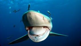 Los dientes agudos del tiburón imagenes de archivo